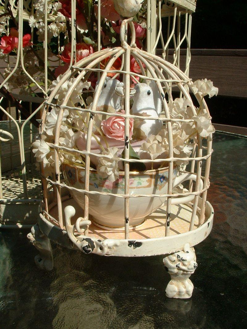 Love birds 045