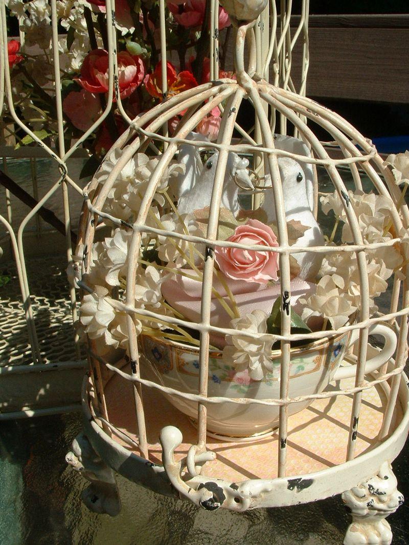 Love birds 047