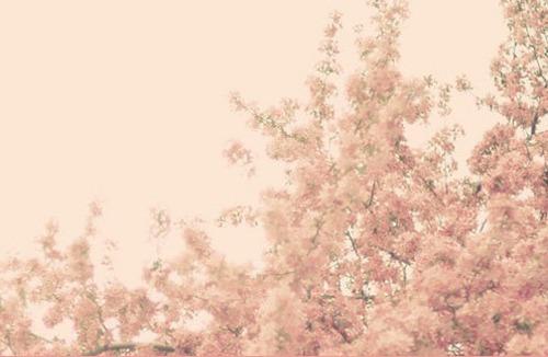 Pinkcherryblossoms