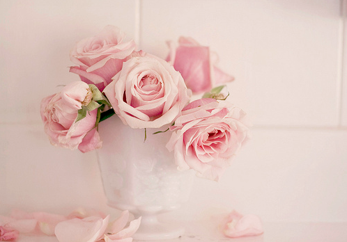 Pink roses8