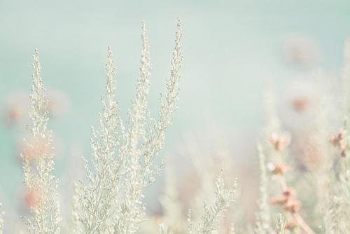 Pinknblues